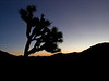 Joshua Tree National Park : Joshua Tree National Park is a beautiful place! Here are photos from 5 trips to Joshua Tree, 4 of them in the last 18 months. Captions below most photos describe the location.